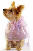 Furra Wang Wedding Fancy Dog Wear