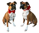 Red Sparkle Dog Unisex Bow/Bow Tie