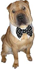 Dog bowties, dog ties and fancy shirt style dog wear